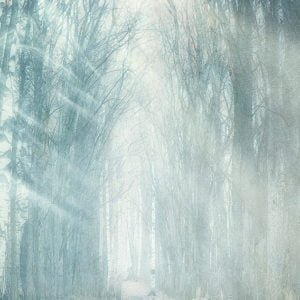 winter forest backdrops photo