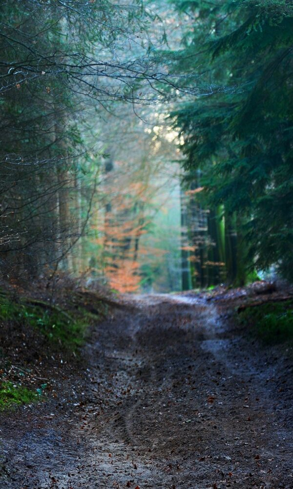 forest walk backdrops photo