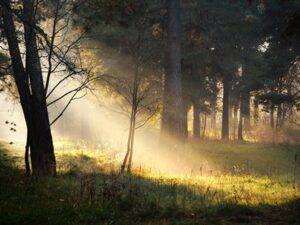 Forest Sunshine