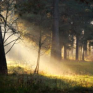 Forest Sunshine Diffused