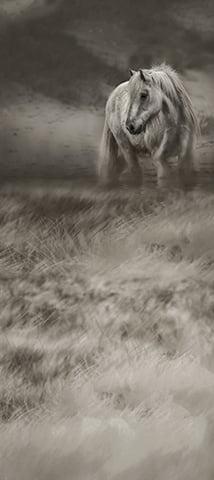 Dark Horse ProFabric Backdrop